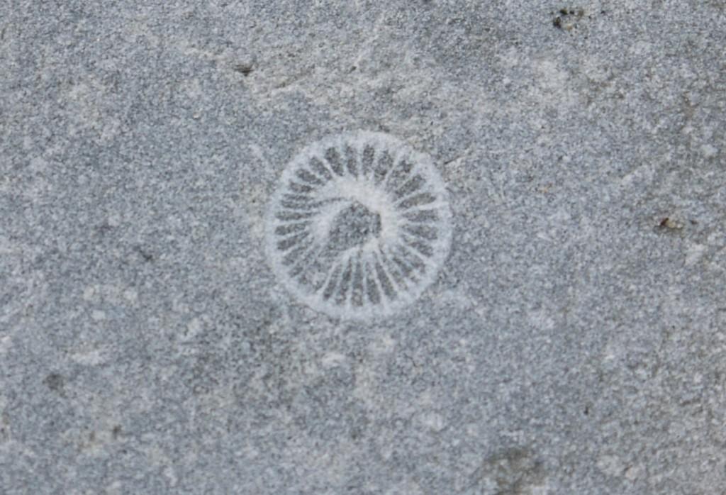 Pieter ontdekt een fossielafdruk in de stoep van de kerk in Willemstad