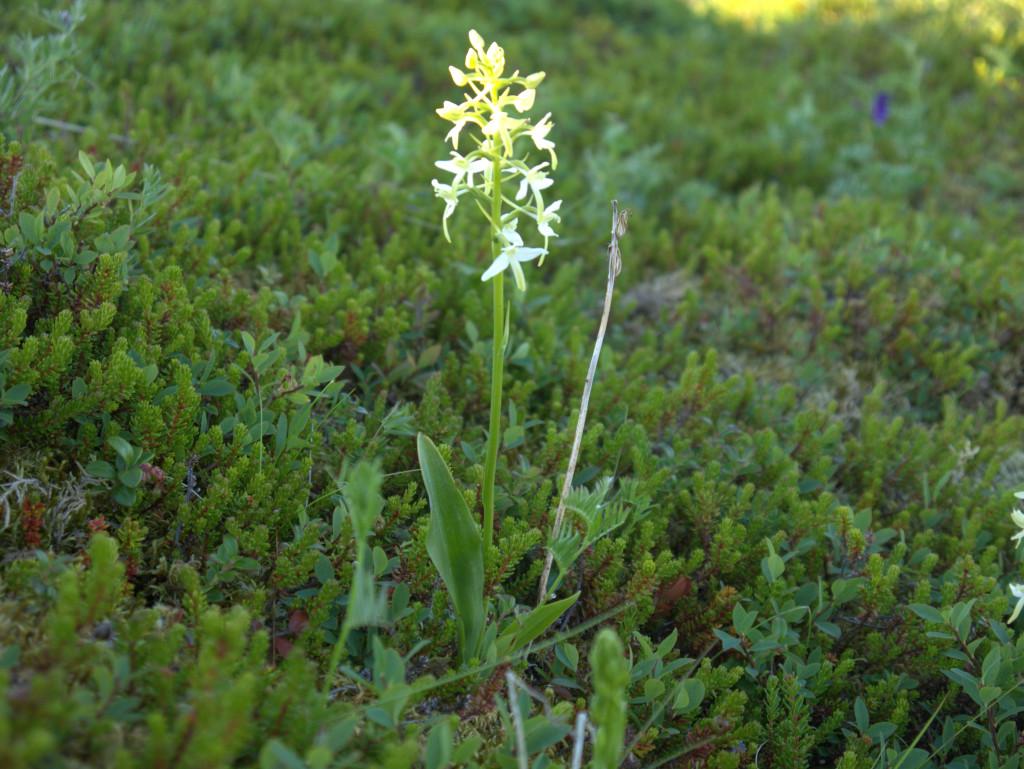 Een mooie orchidee