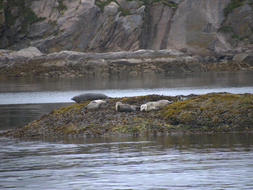 Nieuwsgierige zeehonden