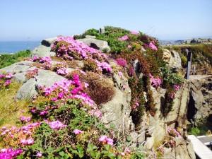 Bloemen op de rotsen van Beaucette